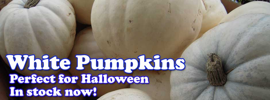 White Pumpkins - Perfect for Halloween - In Stock now!