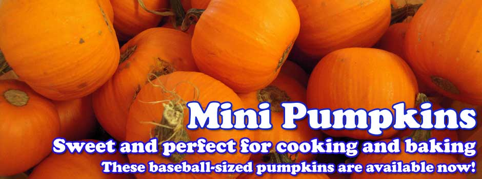 Mini Pumpkins - sweet and perfect for cooking and baking - In Stock now!